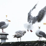 wingfinding-white